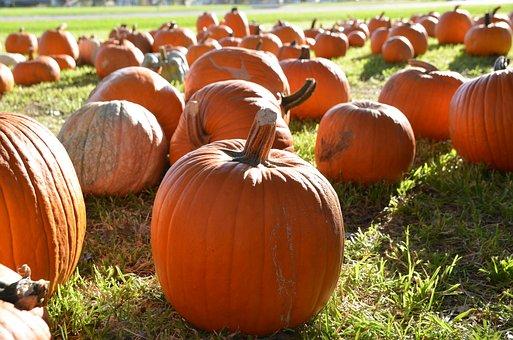 Pumpkins, Orange Pumpkins, Fall, Orange, Autumn