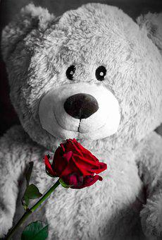 Teddy, Rose, Love, Teddy Bear, Romantic, Cute