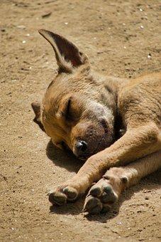 Puppy, Dogs, Sleeping, Cute