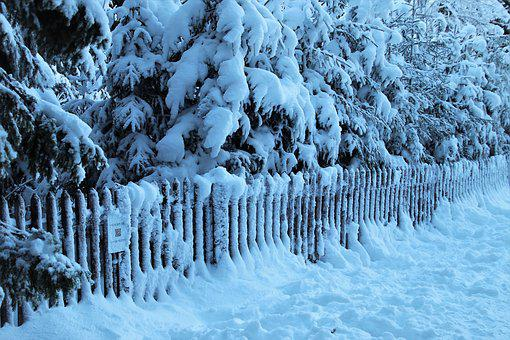 Cold, Fencing, Snow, White, Frozen, Winter, The Fence