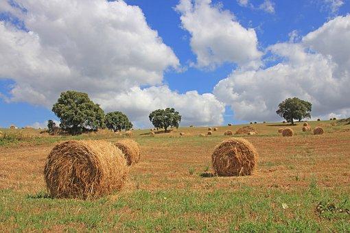 Tuscany, Sky, Vacations, Fields, Straw, Straw Bales
