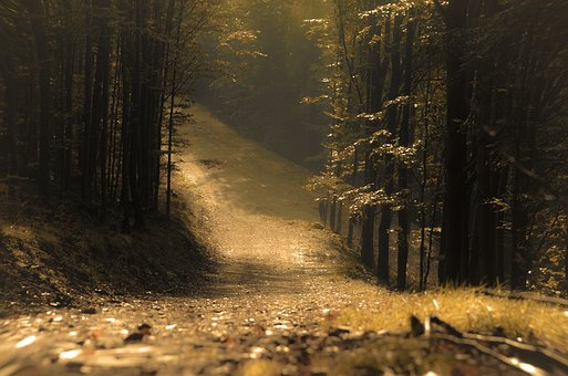 Forest, The Path, Landscape, In The Fall, Tree, Trail