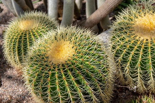Cactus, Greenhouse, Botanical, Garden, Thorny, Heat