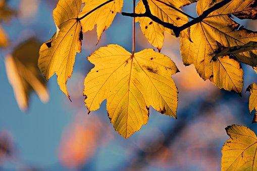 Autumn Leaf, Veins, Pattern, Twig, Branch, Tree