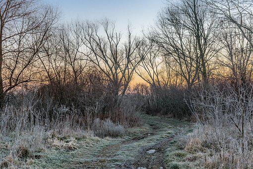 Winter, River, Nature, Trees, Outdoors, Travel, Sunset