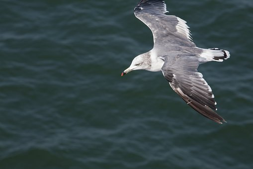 Seagull, New, Animal, Nature, Water, Flight, Lake, Blue
