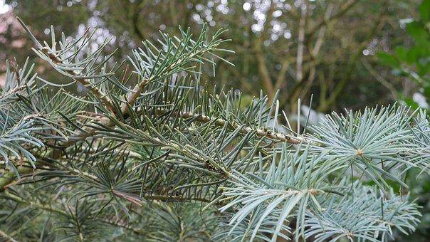 Fir Tree, Green, Winter, Tree