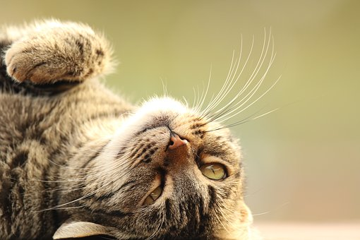 Animal, Cat, Close Up, Upside Down, Outdoors