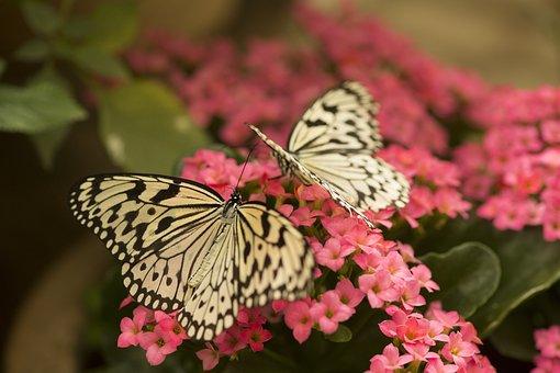 Butterflies, Butterfly, Nature, Flowers, Blossom, Bloom