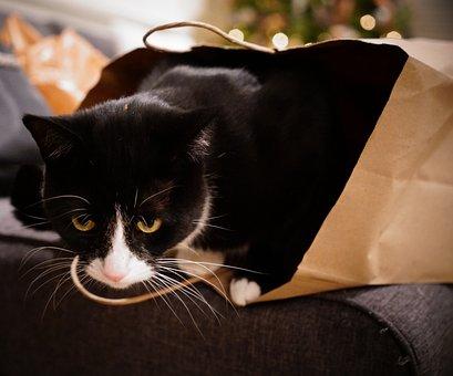 Cat, Bag, Christmas Tree, Eyes, Black
