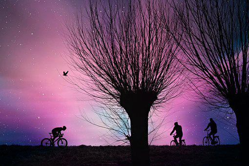 Tree, Road, Cyclist, Bicycle Ride, Dawn, Silhouette