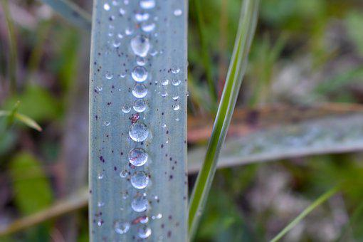 Formentera, Green, Water, Drops, Plant