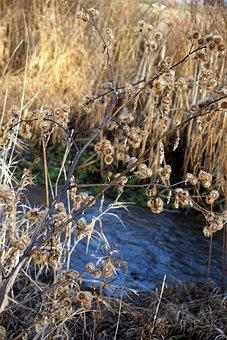 Water, Bush, Flower, Nature, Landscape, Grass, Mood