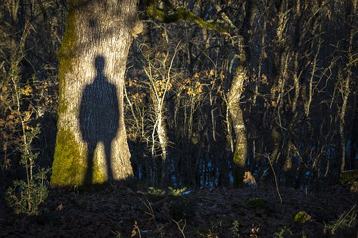 Shadow, Silhouette, Ghost, Forest, Twilight, Nature