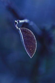 Leaf, Frost, Frozen, Winter, Hoarfrost, Cold, Ice