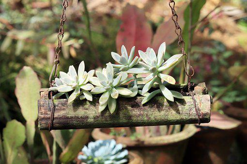 Plant, Green, Pot, Garden