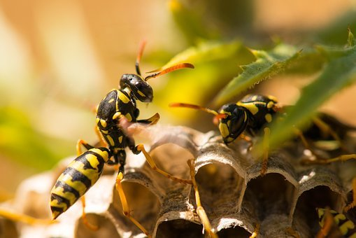 Wasp, Insect, Nest, Nature, Yellow, Bug, Animal, Hornet