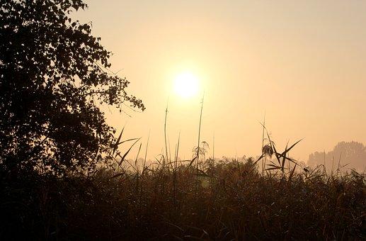 Morning, Foggy, Sunrise, Autumn, Waterfront, Reed