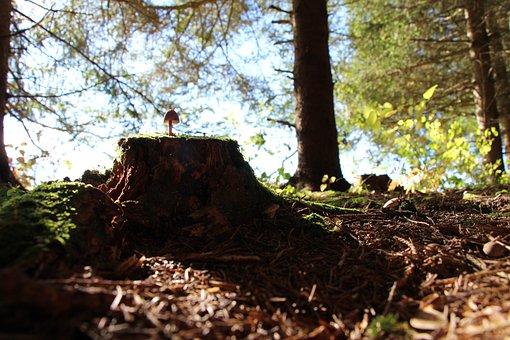 Forest, Mushroom, Tree Stump, Nature, Autumn, Mushrooms