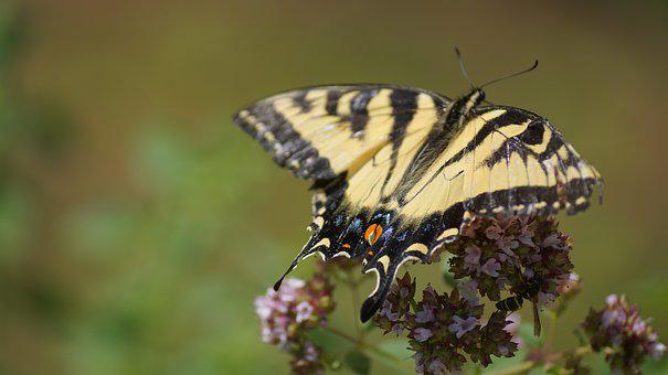 Nature, Summer, Yellow, Butterflies, New Hampshire