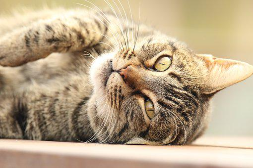 Animal, Cat, Portrait, Lying Down, Table, Outdoors