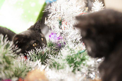 Cats, Christmas, Wreath, Kitten, Pet, Portrait, Head