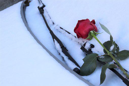 Red Rose On Car Windscreen, Winter, Romantic