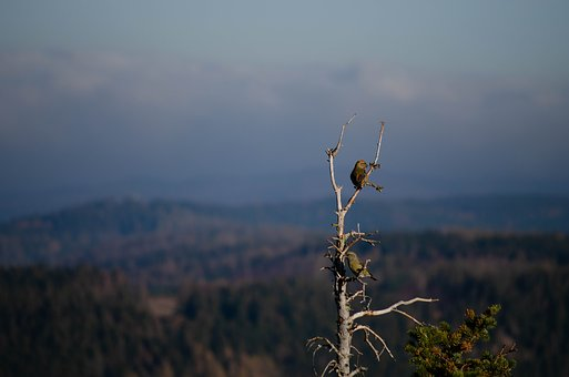 Bird, Resin, Forest, Macro, Nature, Autumn, Branches