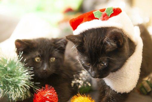 Christmas, Cats, Kittens, Santa, Red, Kitten, Animals