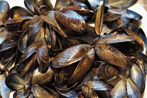 Seashell, Mussels, Edible, Peeled, Sea, Fruits, Shells