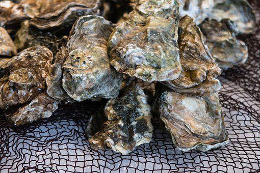 Oyster, Shell, Market, Food, Seafood, Marine, Clam