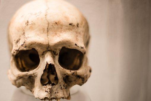 Skull, Human, Horror, Skeleton, Death, Scary, Bone