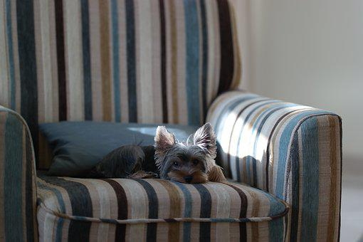 Puppy, Sleep, Dog, Sunlight, Cute, Gray Sleep