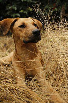 Dog, Pet, Animals, Pets, Puppy, Cute, Adorable, Tamed