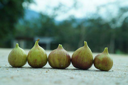Figs, Tropical Figs, Agriculture, Supermarket Goods