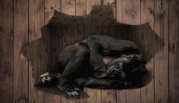 Gorilla, Cage, Lying, Habitat, Sad, Alone, Monkey, Wood