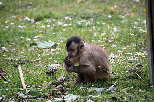 Zoo, Monkey, Food, Animal World, Eat, Feed, Hungry