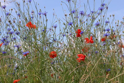 Flowers, Meadow, Wildflowers, Nature, Background