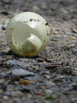 Egg, Bird, Abandoned, Broken