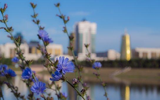 Astana, Kazakhstan, Flowers, Summer, Capital