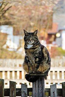 Cat, Domestic Cat, Mackerel, Cat Face, Cat's Eyes, Pet