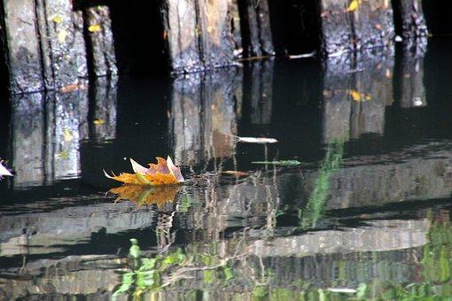 Autumn, Sheet, Brook, Water, Color