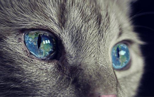 Cat, Earth, Earthmoving, World, Cute, Sweet