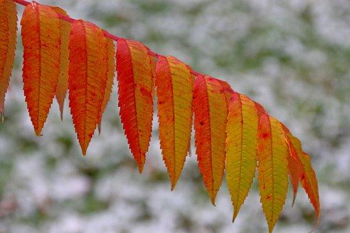 Autumn, Colorful, Color, Fall Foliage, Background