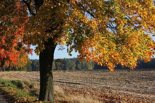 Autumn, Leaves, Tree, Nature, Forest, Fall Foliage