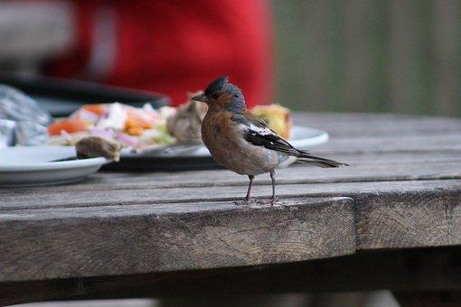 Bird, Curious, Nature, Plumage, Feather, Colorful