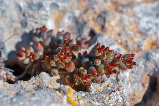 Formentera, Plant, Fleshy, Stones, Field, Nature
