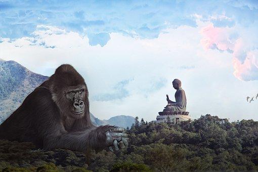 Gorilla, Budda, King Kong, Giant, Monkey, Hong Kong