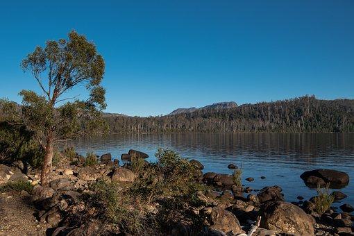 Lake St Clair, Lake, Tasmania, Cynthia Bay, Nature