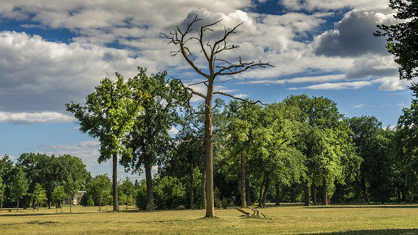 Landscape, Trees, Sky, Clouds, Dead Tree, Nature, Rest
